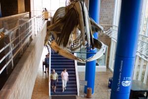 Museum_firstUS